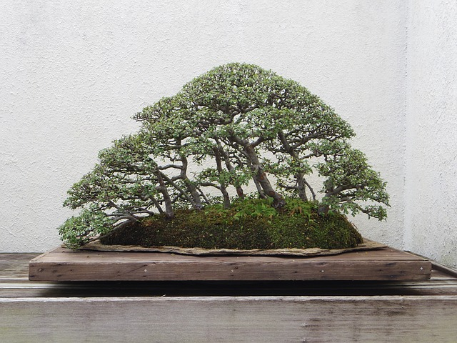 Outdoor Bonsai: Arten & Pflegetipps